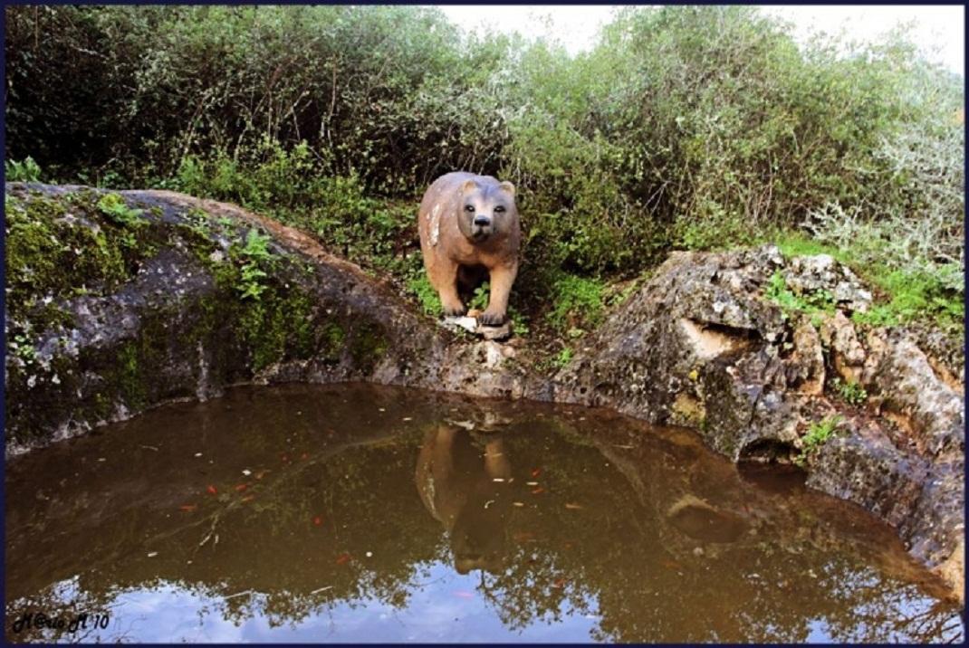 Pia do Urso - Cópia